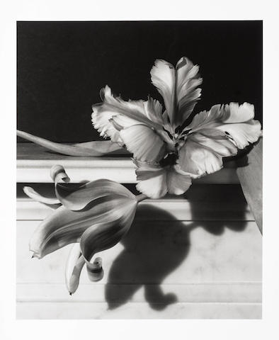 Horst P. Horst (German/American, 1906-1999) Tulips, Oyster Bay, Long Island, 1989