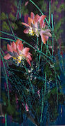 Huang Yongyu (b.1924) Lotus