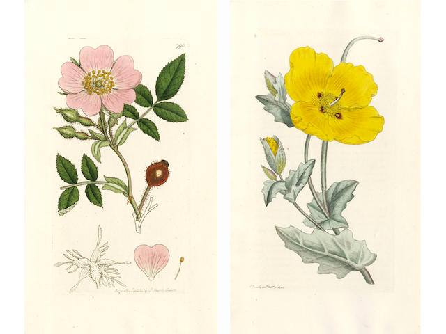 SOWERBY (JAMES) English Botany; or, Coloured Figures of British Plants, with Their Essential Characters, Synonyms, and Places of Growth, 36 vol. in 24