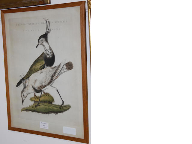 After Eleazar Albin 'The Auk or Razor Bill' engraving, with later hand colouring, 19.5 x 25cm; together with two other ornithological prints. (3)