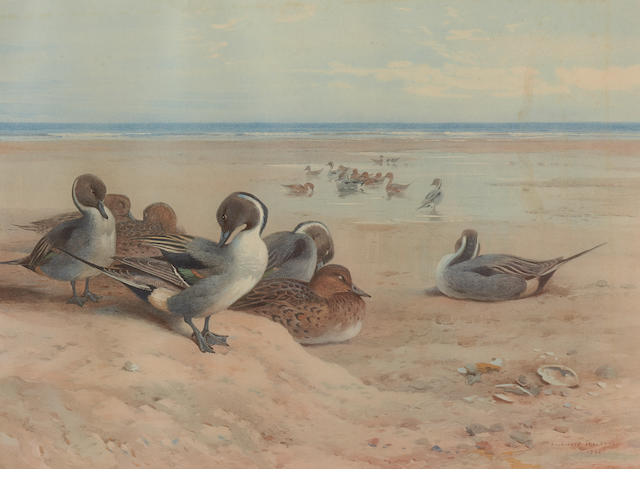 After Archibald Thorburn Four coloured prints of wading birds and two similar of game birds  30.5 x 45.5cm and smaller (6)