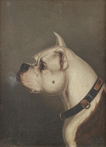 Edwin Loder of Bath (British, 1827-1885) English Bull Terrier head studies