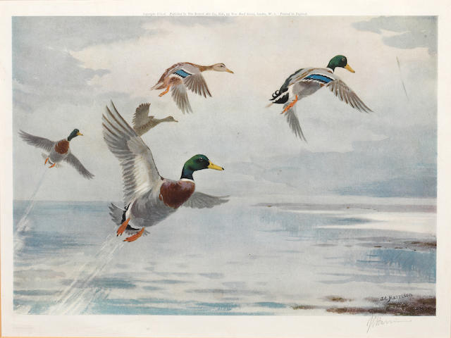 John Cyril Harrison (British, 1898-1985) Mallards in flight