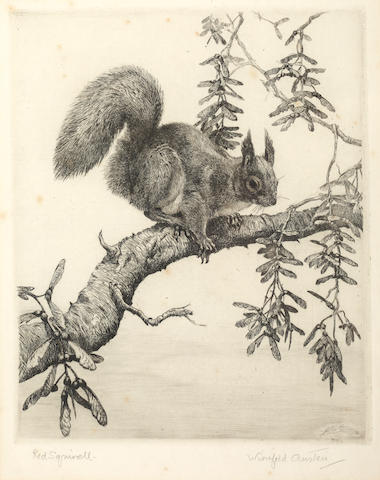Winifred Marie Louise Austen (British, 1876-1964) Red Squirrell signed in pencil to the margin etchi