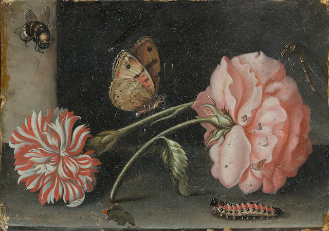 Abraham Bosschaert (Antwerp circa 1612-1643) A still life of a pink rose and a red and white carnation on a stone ledge with a bee, a butterfly, a dragonfly and a caterpillar unframed