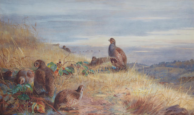 Archibald Thorburn (British, 1860-1935) The covey at daybreak - Partridges