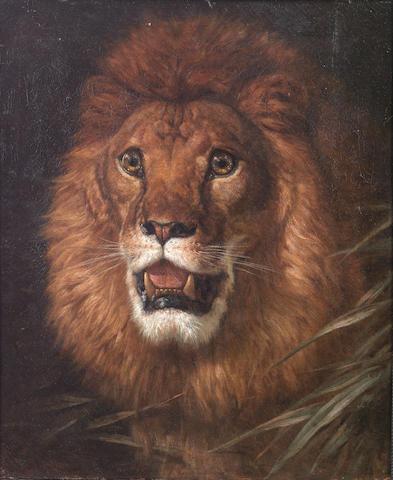 Filippo Palizzi (Italian, 1818-1899) The lion