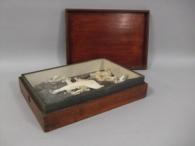 """A Gentleman Naturalist's """"museum"""" box"""