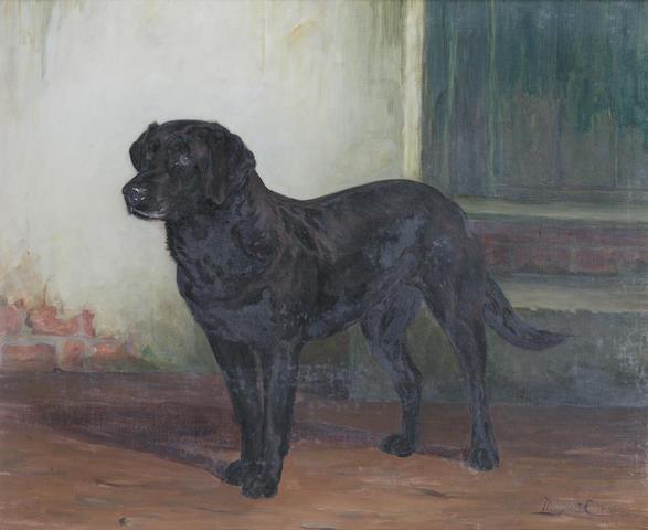 Margaret Collyer (British, 1872-1945) A portrait of a Black Labrador 24 7/16 x 29 1/2 in. (62 x 75 cm.)