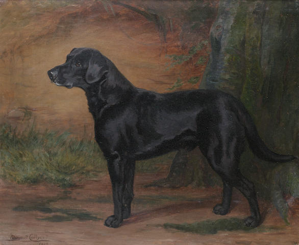 Margaret Collyer (British, 1872-1945) Portrait of a Black Labrador 25 x 30 in. (63.5 x 76 cm.)