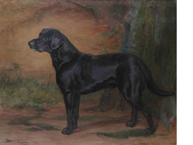 Margaret Collyer (British, 1872-1945) Portrait of a Black Labrador 62 x 75cm