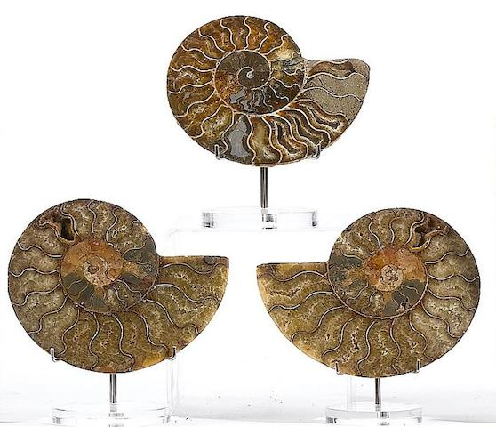 Three pairs of cut and polished ammonites, Jurassic period (206-144 million years ago),