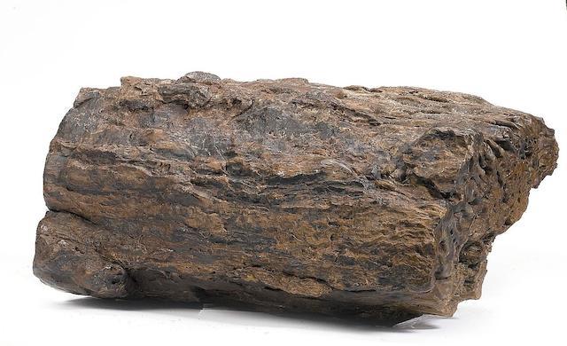 A petrified wood log,
