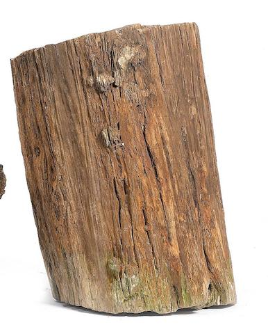 A petrified wood log, Northern Patagonia (130-150 million years old),