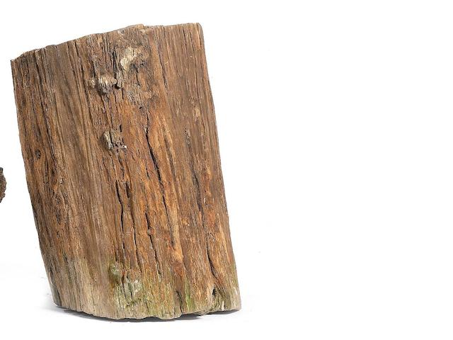 A petrified wood log,