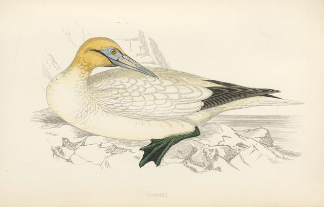 MORRIS (FRANCIS ORPEN) A History of British Birds