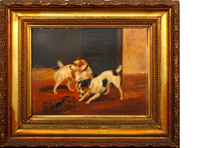Follower of George Armfield (British, 1810-1893) Two terriers with a caged rat
