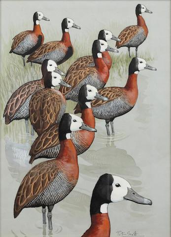 Peter Markham Scott (British, 1909-1989) White faced ducks