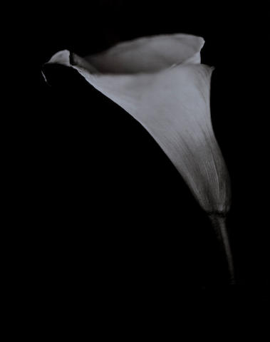 Chuck Close (American, 1940) Calla Lily, 2007 Paper size 78 x 65 cm, image size 65.2 x 50.6 cm.