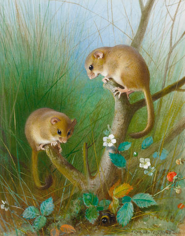 Archibald Thorburn (British, 1860-1935) Dormice