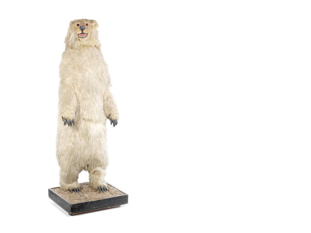 A large standing polar bear electric automaton,  circa 1960,
