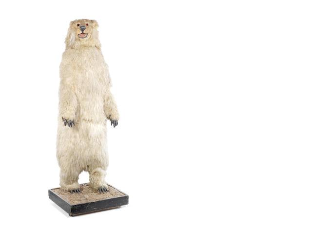 A large standing polar bear electric automaton,  circa 1960,
