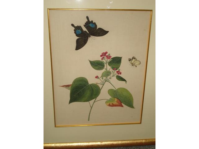 Chinese(?) School, 19th Century Studies of flowers and insects, a pair,