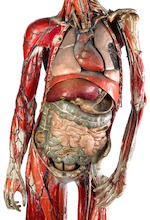 A fine life-size intricately-detailed anatomical model, devised and created by the French physician Dr. Louis Thomas Jerome Auzoux, -
