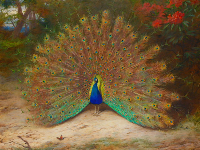 Archibald Thorburn (British, 1860-1935) Peacock and Peacock Butterfly