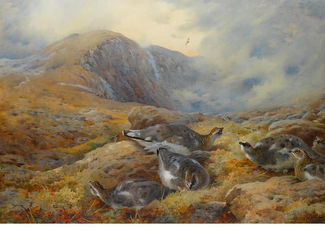 Archibald Thorburn (British, 1860-1935) Danger aloft - Ptarmigan
