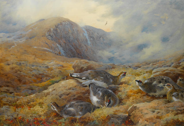 Archibald Thorburn (British, 1860-1935) Danger aloft - Ptarmigan