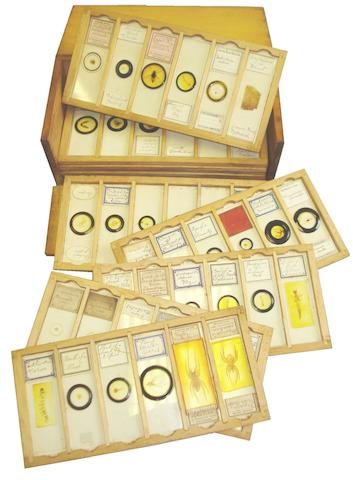 A large collection of microscope slides