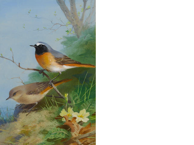 Archibald Thorburn (British, 1860-1935) Pair of Redstarts