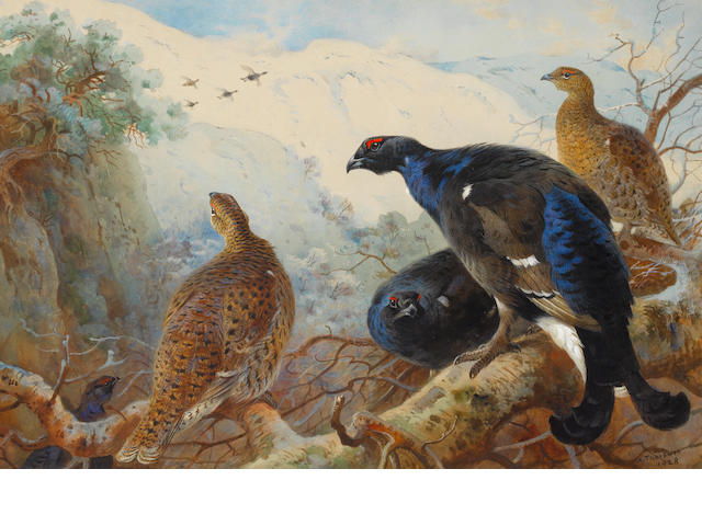 Archibald Thorburn (British, 1860-1935) Blackgame
