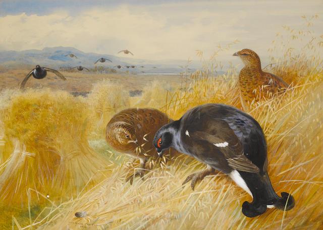 Archibald Thorburn (British, 1860-1935) On the stooks - Blackgame
