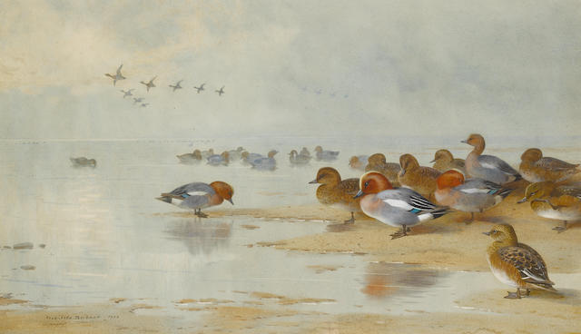 Archibald Thorburn (British, 1860-1935) Wigeon and Teal by the water's edge