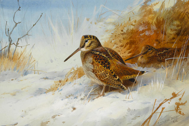 Archibald Thorburn (British, 1860-1935) Winter Woodcock