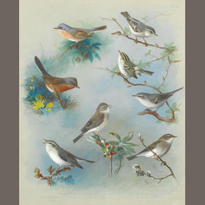 Archibald Thorburn (British, 1860-1935) Warbler and Wrens