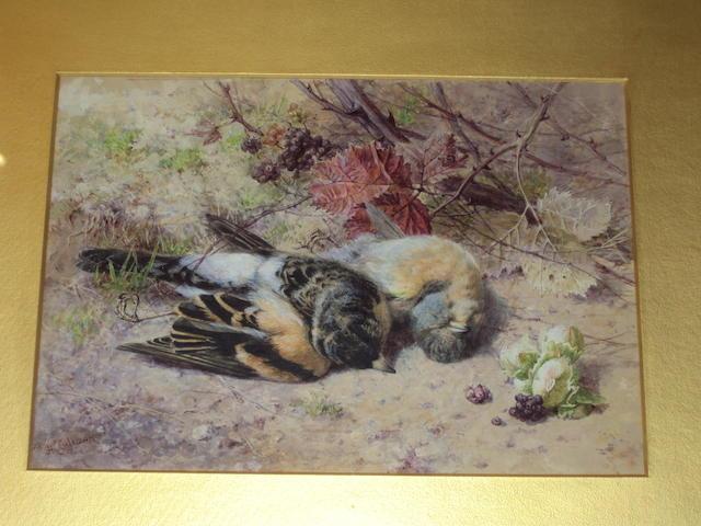 Helen Cordelia  Angell (British, 1847-1884) 'Dead Finches'