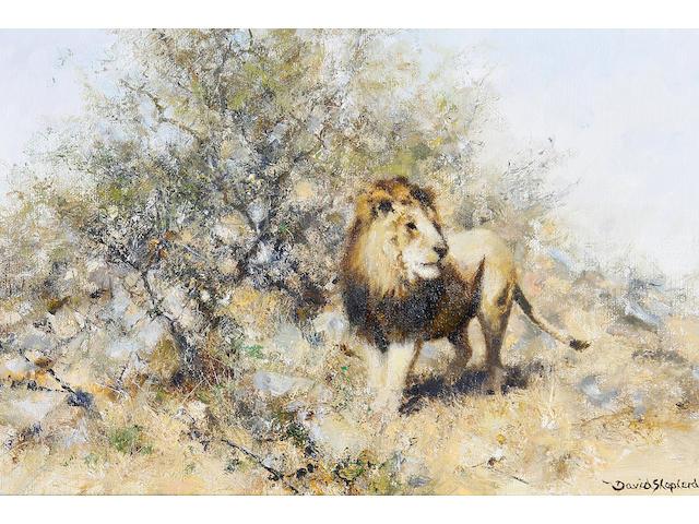 David Shepherd, O.B.E. (British, born 1931) 'Lion on alert'