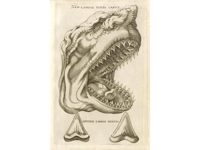 STENO (NICOLAUS) Elementorum myologiae specimen, seu musculi descriptio geometrica