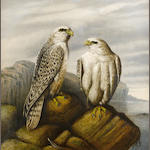 Attributed to Josef Wolf (German, 1820-1899) Gyr falcons on a rocky ledge