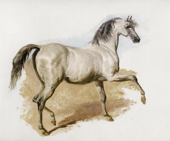 John Frederick Herring, Snr. (British, 1795-1865) Study of a grey Arab mare