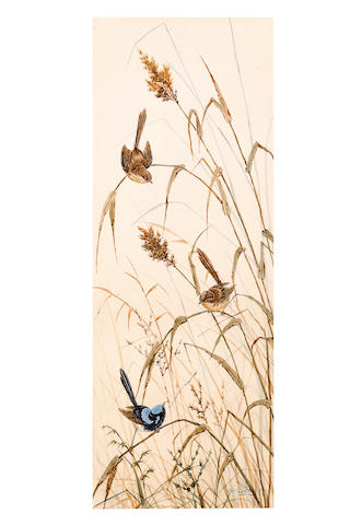 Neville William Cayley (Australian, 1887-1950) A blue wren and two brown wrens