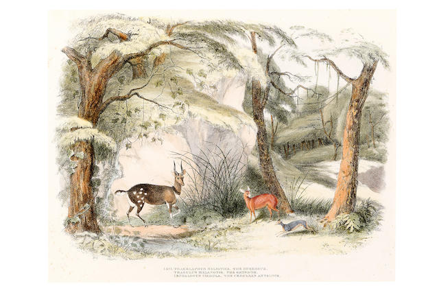 After W C Harris Eleven framed lithographs of native African animals including, The Bontebok, The African Wild Boar & Reitbok, The Brindled Gnoo, The Gemsbok, The Gnoo, The Eland, The Bushbuck & Grysbok & Cerulean Antelope, The African Rhinoceros, The Water Buck, The Hartebeest, The Lion, 33cm high, 44cm wide 11