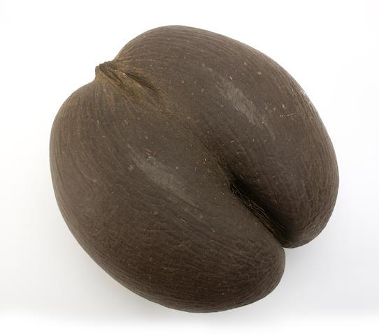 A 19th century Coco De Mer nut (Lodoicea maldivica)