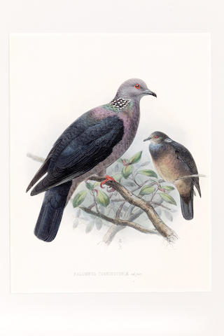 Johannes Gerardus Keulemans (Dutch, 1842-1912) William Vincent Legge's History of the Birds of Ceylon (1880), including 26 hand coloured lithographs of Birds of Ceylon