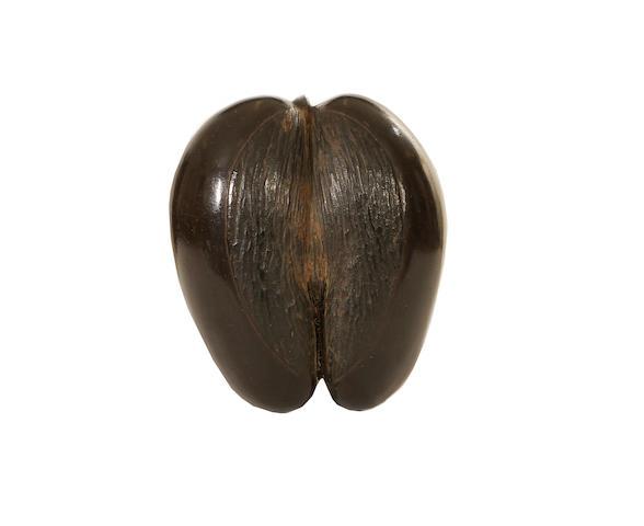 A Seychelles coco-de-mer nut Lodoicea maldivica