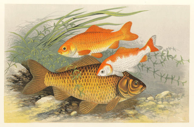HOUGHTON (WILLIAM) British Fresh-Water Fishes, 2 vol.