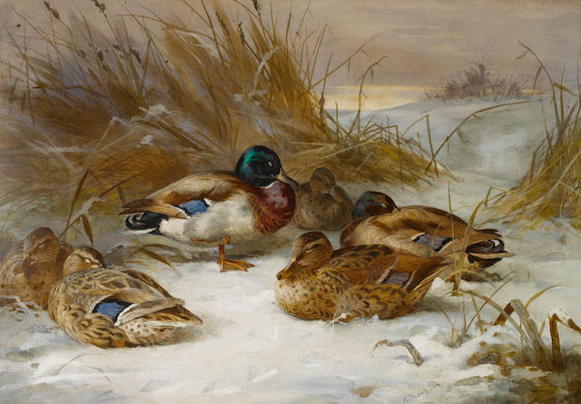 Archibald Thorburn (British, 1860-1935) Winter landscape with mallard